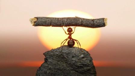 hormiga levantando tronco con actitud