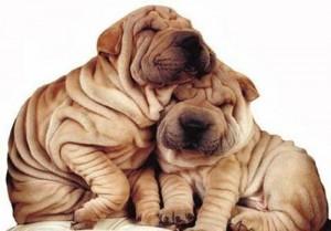 amistad-perros