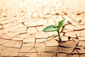 RESILIENCIA ser resiliente